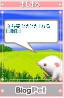 mashimaro050517