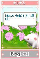 mashimaro050623