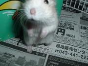 sasuke24