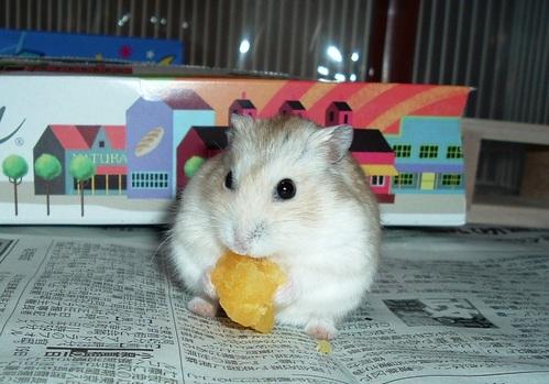 焼き芋大好き~♪