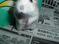 Sasuke0611134